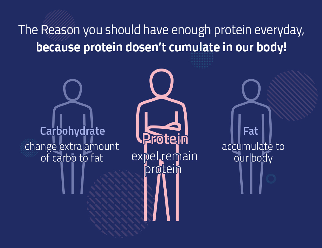The Reason you should have enough protein everyday, because protein dosen't cumulate in our body!